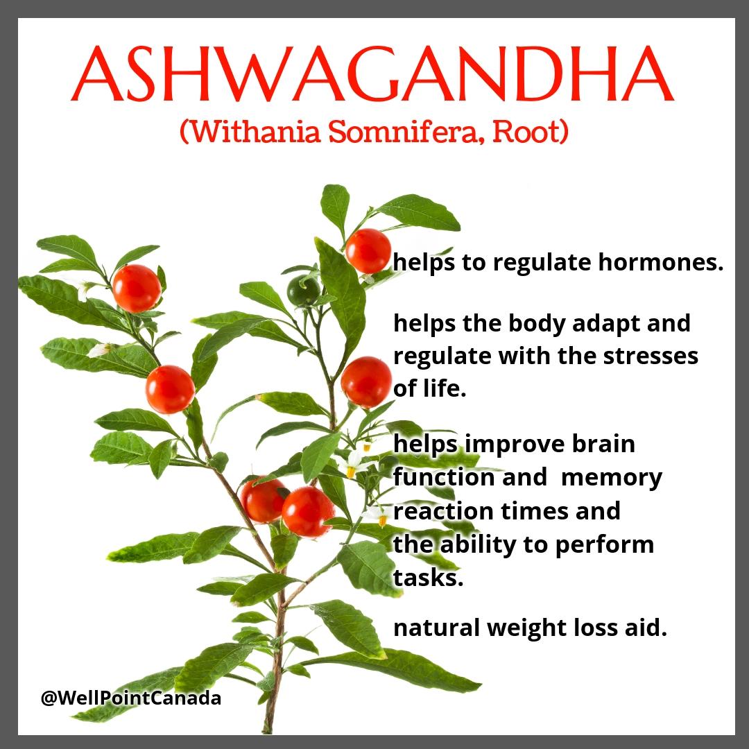 ASHWAGANDHA…VITAL FOR OPTIMUM HEALTH
